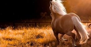 Tony. The Pony from Benoni