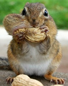 Never put all the nuts in your mouth at once.